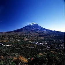 富士山麓の青木ヶ原樹海が今海外で話題沸騰!観光客に注目される訳は