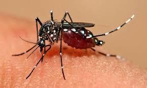 ジカ熱は2016年夏以降日本で流行するか?! 感染時のリスクは?